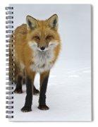 Foxy.. Spiral Notebook