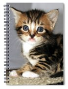 Foxy The Kittens Big Eyes Spiral Notebook