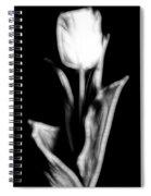 Fractal Tulip Spiral Notebook