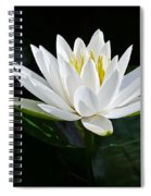 Fragrant Water-lily Spiral Notebook