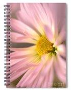 Frail Beauty Spiral Notebook