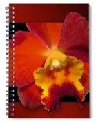 Framed Red Orchid  Spiral Notebook