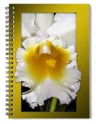 Framed White Orchid Spiral Notebook