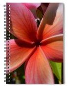 Frangipani . 1.1 Spiral Notebook