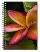 Frangipani Creation Spiral Notebook