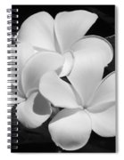 Frangipani In Black And White Spiral Notebook
