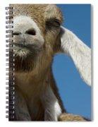 Frankly My Dear I Don't Give A Baaaaaaaaa Spiral Notebook