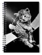 Frees Kittens, C1914 Spiral Notebook