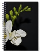 Freesia On Black Spiral Notebook