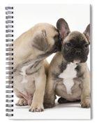 French Bulldog Puppies Spiral Notebook