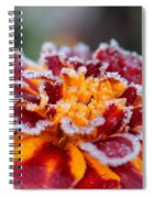 French Marigold Named Durango Red Outlined With Frost Spiral Notebook