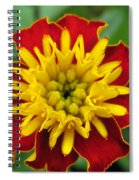 French Marigold Named Solan Spiral Notebook