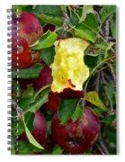 Fresh Fruit Spiral Notebook