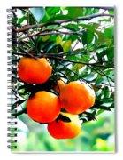Fresh Orange On Plant Spiral Notebook