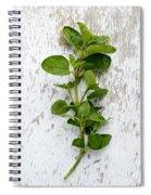 Fresh Oregano Spiral Notebook