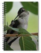 Freshing Up Spiral Notebook
