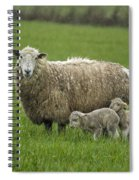 Freshly Made - Winter Lambs Spiral Notebook