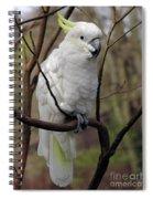 Friendly Cockatoo Spiral Notebook