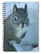 Friendly Squirrel Spiral Notebook