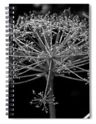Frills In Black And White Spiral Notebook