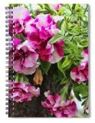 Frills Spiral Notebook