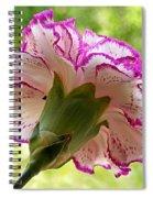 Frilly Carnation Spiral Notebook