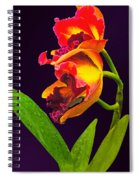 Frilly  Red And Yellow Orchids Spiral Notebook