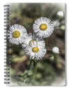Fringed Daisy Spiral Notebook