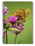 Fritillary Butterfly Square Format Spiral Notebook