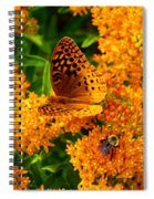 Fritillary On Butterfly Weed Spiral Notebook