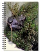 Frog On Moss On Wall Spiral Notebook