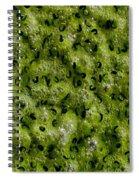 Frog Spawn Spiral Notebook