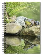 Bull Frog On A Rock Spiral Notebook