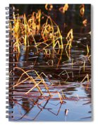 Froggy Sunset Spiral Notebook