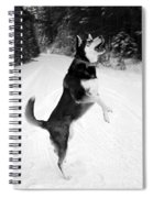 Frolicking In The Snow - Black And White Spiral Notebook