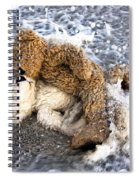 From Bear To Eternity - By William Patrick And Sharon Cummings Spiral Notebook