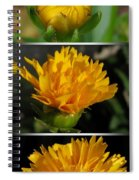 From Bud To Bloom - Coreopsis Named Early Sunrise Spiral Notebook