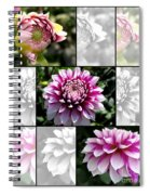 From Bud To Bloom - Dahlia Named Brian Ray Spiral Notebook