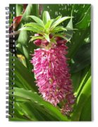 From Bud To Bloom - Eucomis Named Leia Spiral Notebook