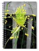 From Bud To Bloom - Fireworks Allium Spiral Notebook