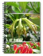 From Bud To Bloom - Gloriosa Named Rothschildiana Spiral Notebook
