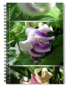 From Bud To Bloom - Phaseolus Caracalla Spiral Notebook