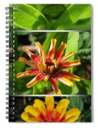 From Bud To Bloom - Zinnia Spiral Notebook