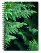 Fronds Of The Leyland Cypress Spiral Notebook