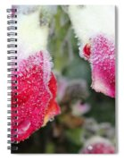 Frost Bears Down On Snapdragon Named Floral Showers Red And Yellow Bicolour Spiral Notebook