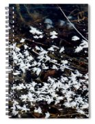 Frost Flakes On Ice - 10 Spiral Notebook