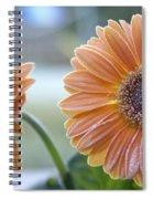 Frosted Gerberas Spiral Notebook