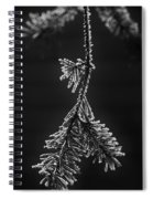 Frosted Pine Branch Spiral Notebook
