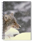 Frosty Coyote Spiral Notebook
