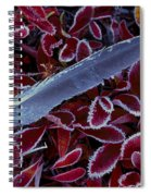 Frosty Feather Spiral Notebook